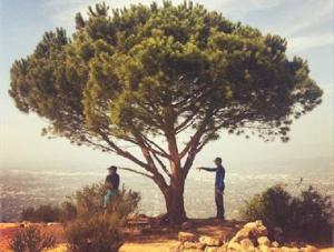 ! 1 wisdom-tree-flentie