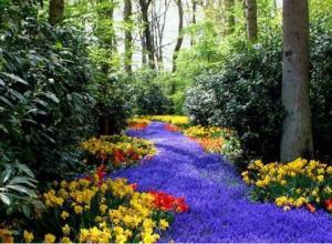 ! 00000 spring-flowers-flowers