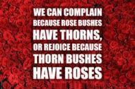 roses-positivethesaurus.jpg